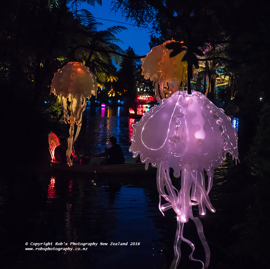 Studio Lighting Nz: Sony A7RII Floating Jellyfish At Festival Of Lights At